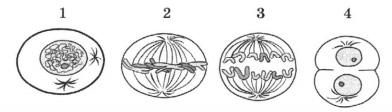 Рисунок к заданию 6