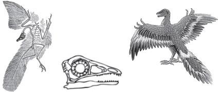 Скелет с отпечатком перьев и реконструкция археоптерикса