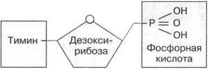 Рисунок Нуклеотида к заданию А6 вариант 1