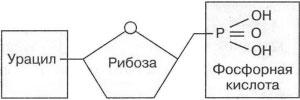 Рисунок Нуклеотида к заданию А8 вариант 2